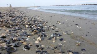 Strand Casal Borsetti 1