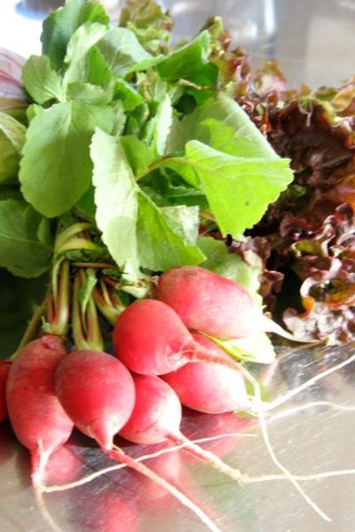 キッチンスタジオ◆横浜ミサリングファクトリー-野菜