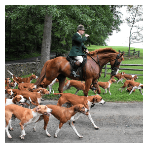 learn more about hounds and hunting