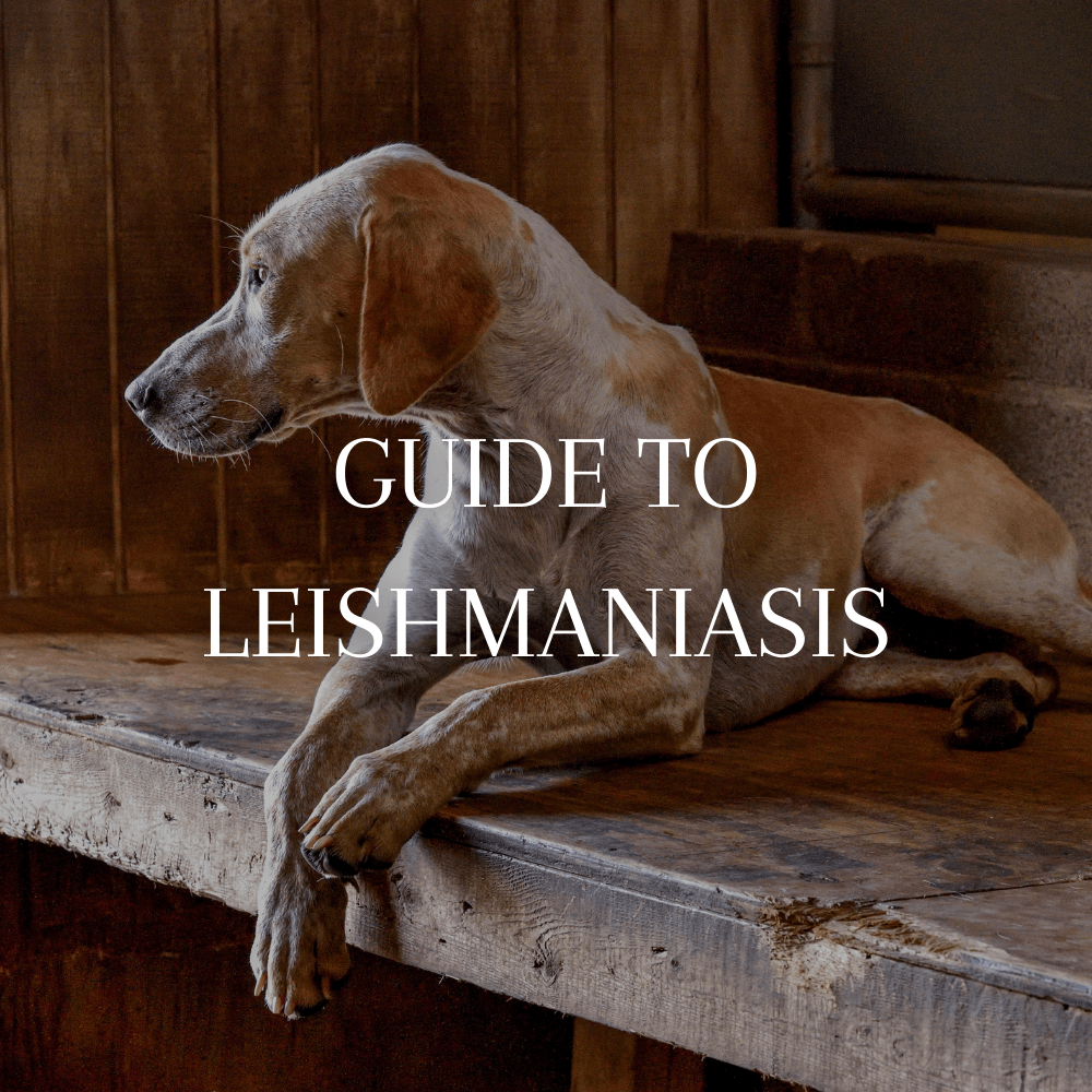 mfha-policies-guidelines-guide-to-leishmaniasis