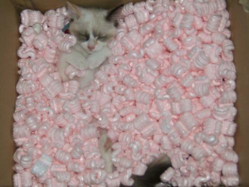 la momia esta durmiendo!!