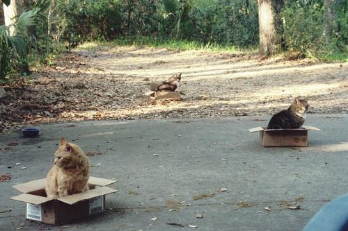 3 Boxes, 3 Cats. Who'da thunk?