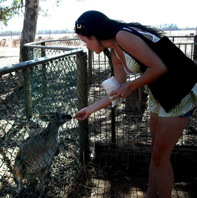 feeding the roos