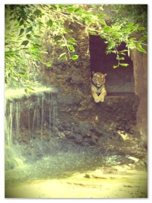 Tiger temple Kanchanaburi