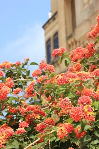 beautiful flowers in Malta