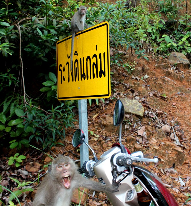 monkeys-thailand