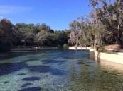 Salt Springs Recreation Area in the Ocala National Forest @ Salt Springs, Florida @ GarzaFX.com