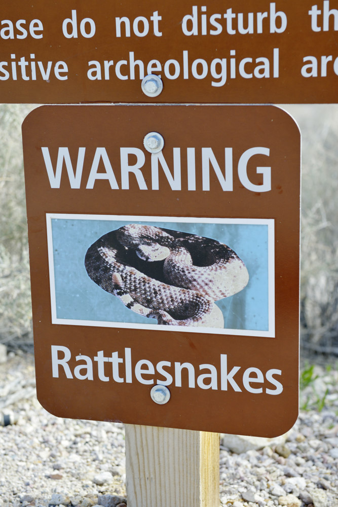 Warning Rattlesnakes
