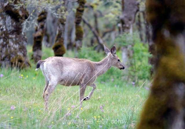 War on deer