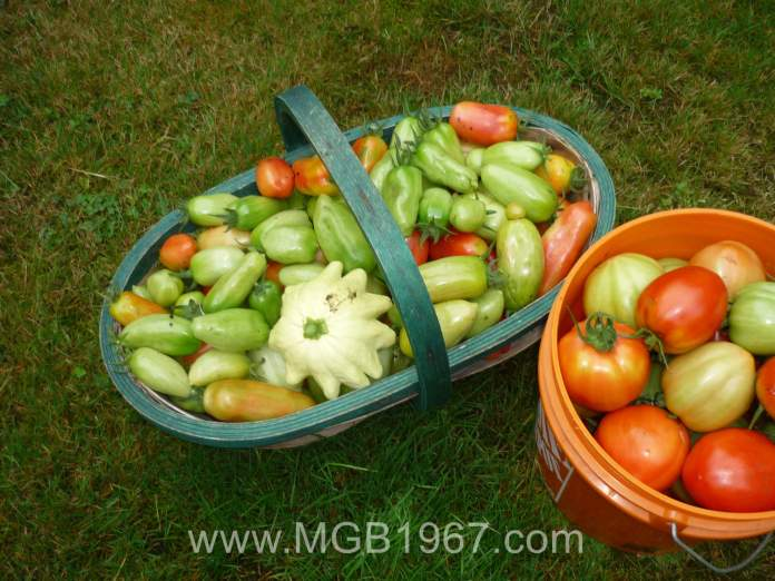 Fresh tomatoes and a cool squash