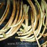 Deer bones laid out in the MGB barn