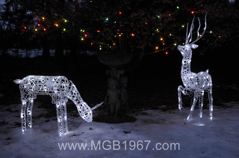 White tail deer bones