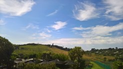 Ah the beauty of the vineyards