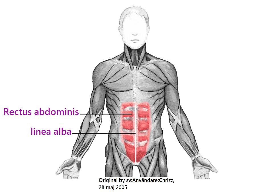 como entrenar los abdominales inferiores