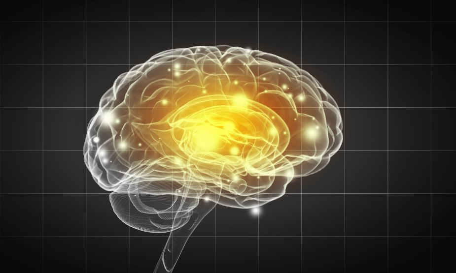 46563418 - science image with human brain on gray background