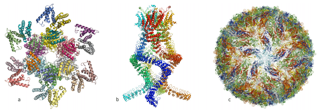 Proteins as seen through cryo-EM