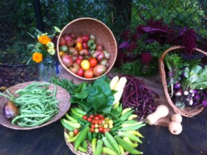 Organic Vegetable Fall Produce