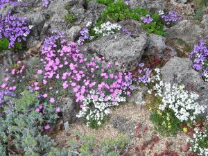 Waterwise Closeup: The waterwise garden is a mélange of colors and textures in late spring.