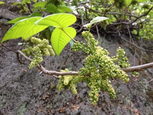 Poison Ivy - Photo:  Fritz Flohr Reynolds