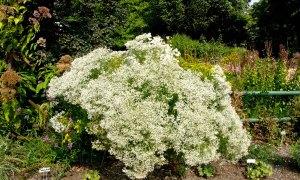 5 September Sunny Garden