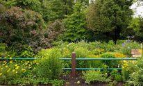 Early June Sunny Garden including yellow native perennials Achillea, Oenothera fruticosa, Baptisia tinctoria, and Coreopsis verticillata along with orange Asclepias tuberosa . © Mary Free