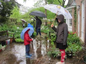 Plants and Puddles at Glencarlyn Library Sale