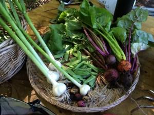 Garlic, beets, peas, etc