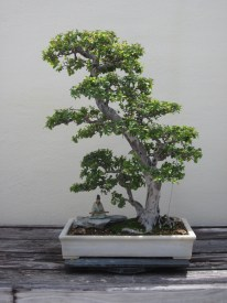 Example of penjing