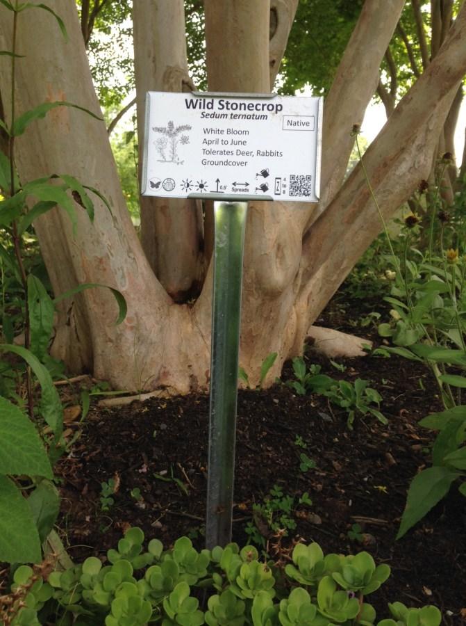 Wild Stonecrop Sign