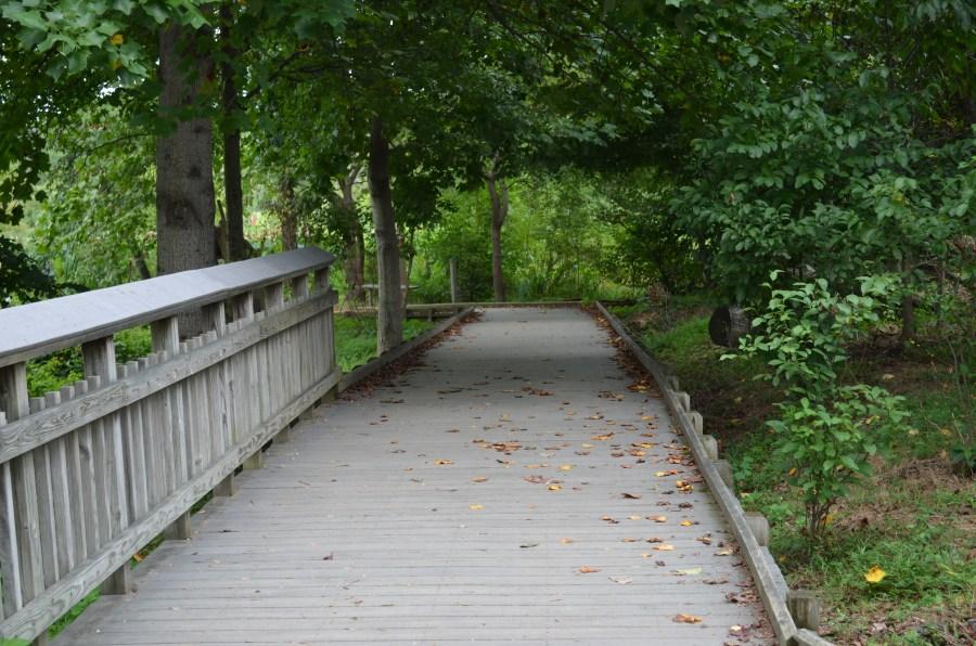 Boardwalk trail through the marsh