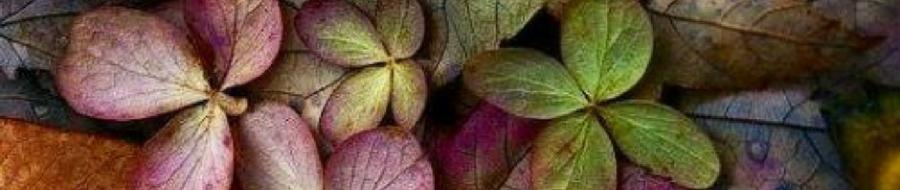 autuum leaves