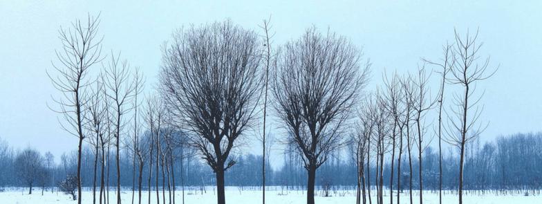 Winters trees