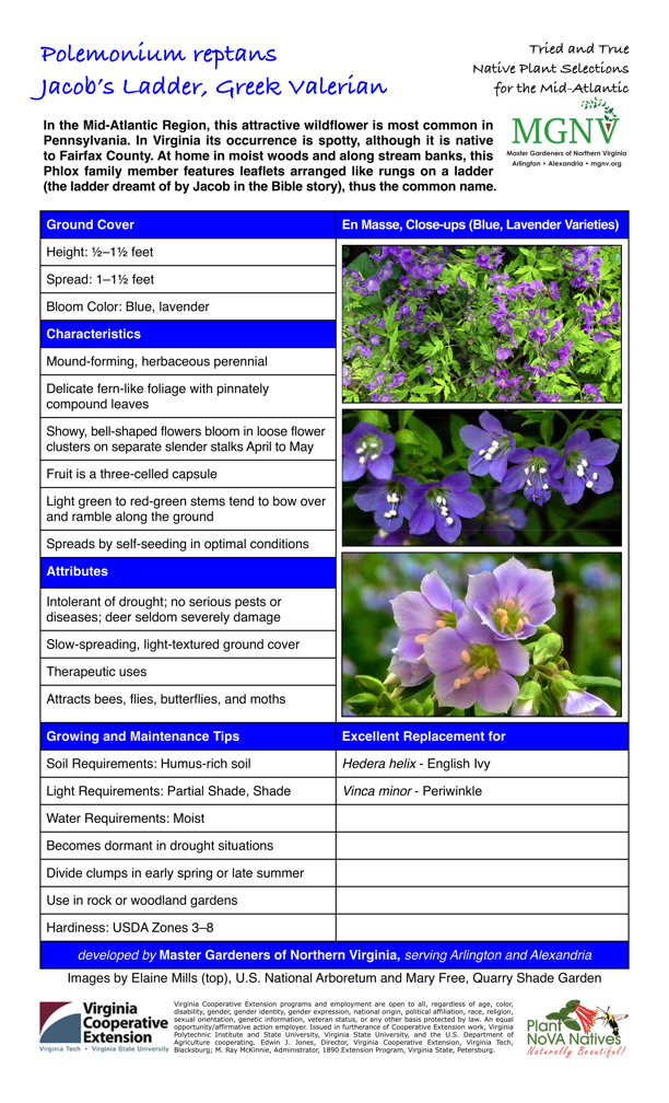 Ground Cover, Polemonium reptans, Jacob's Ladder, Greek Valerian, Height: 1⁄2–11⁄2 feet Spread: 1–11⁄2 feet Bloom Color: Blue, lavender Characteristics Mound-forming, herbaceous perennial Delicate fern-like foliage with pinnately compound leaves Showy, bell-shaped flowers bloom in loose flower clusters on separate slender stalks April to May Fruit is a three-celled capsule Light green to red-green stems tend to bow over and ramble along the ground Spreads by self-seeding in optimal conditions Attributes Intolerant of drought; no serious pests or diseases; deer seldom severely damage Slow-spreading, light-textured ground cover Therapeutic uses Attracts bees, flies, butterflies, and moths Growing and Maintenance Tips Soil Requirements: Humus-rich soil Light Requirements: Partial Shade, Shade Water Requirements: Moist Becomes dormant in drought situations Divide clumps in early spring or late summer Use in rock or woodland gardens Hardiness: USDA Zones 3–8 Excellent Replacement for Hedera helix - English Ivy Vinca minor - Periwinkle