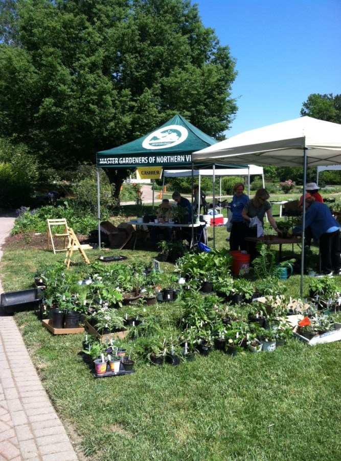 Plants Ready To Be Sorted at the 2015 Green Spring Plant Sale