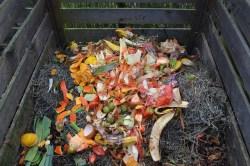 Compost scraps in compost bin