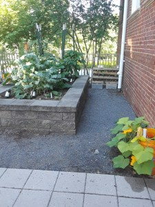 Raised garden by back fence. Small pallet garden and squash plant in self-watering bucket can also be seen