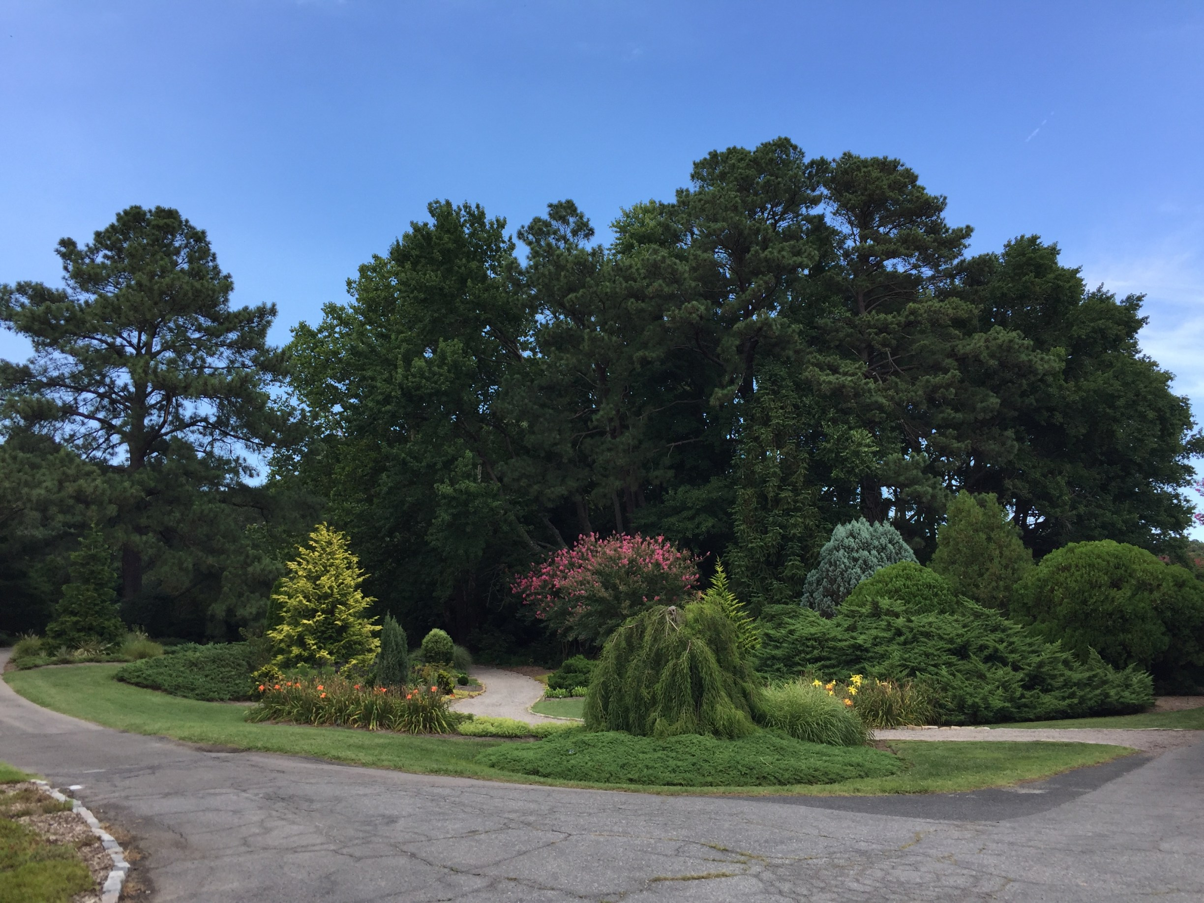 A variety of shrubs and trees in the Conifer Garden. Photo © 2018 Elaine Mills