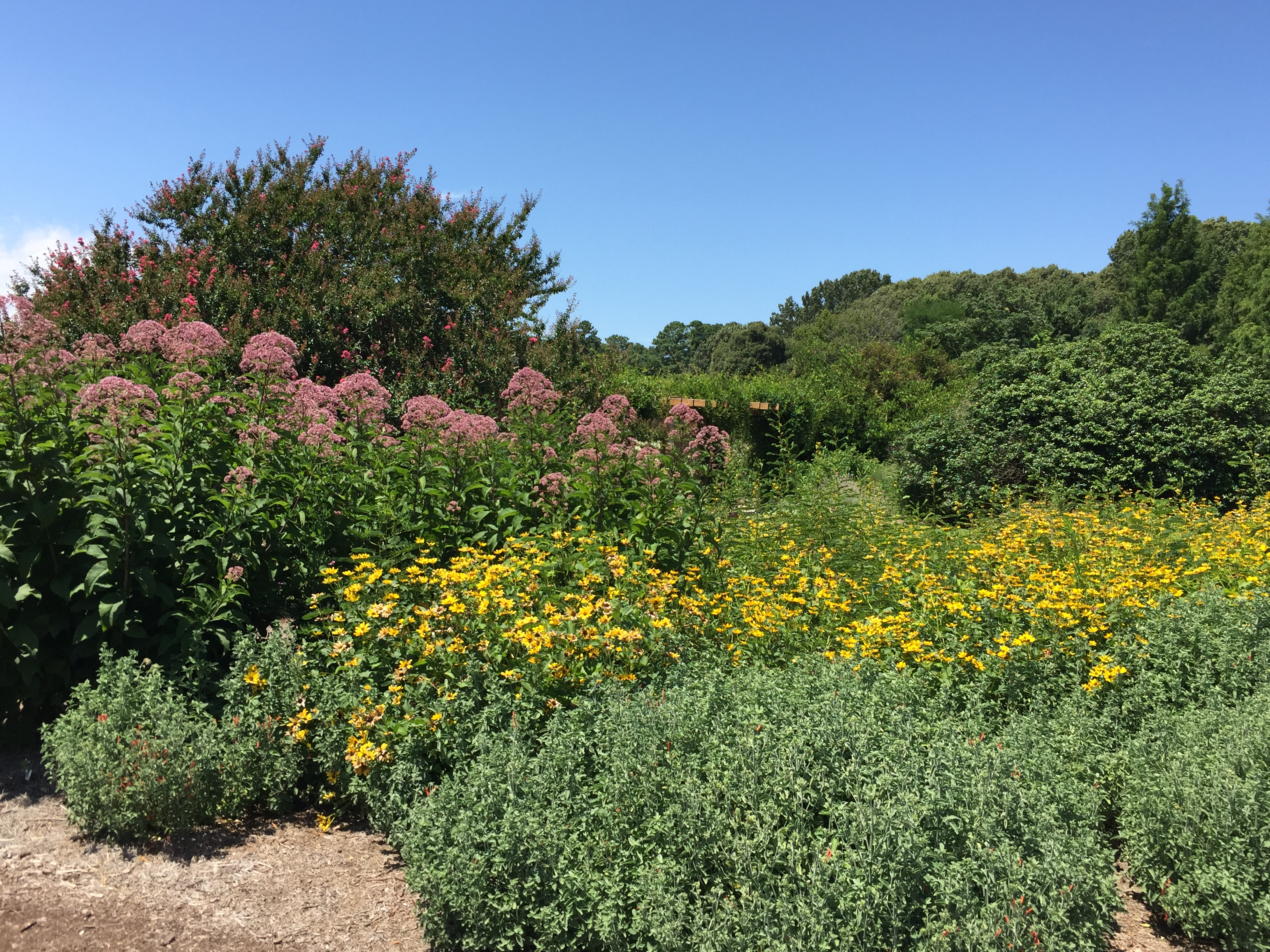 Plants are arranged in naturalistic drifts in the Butterfly Garden. Photo © Elaine Mills.