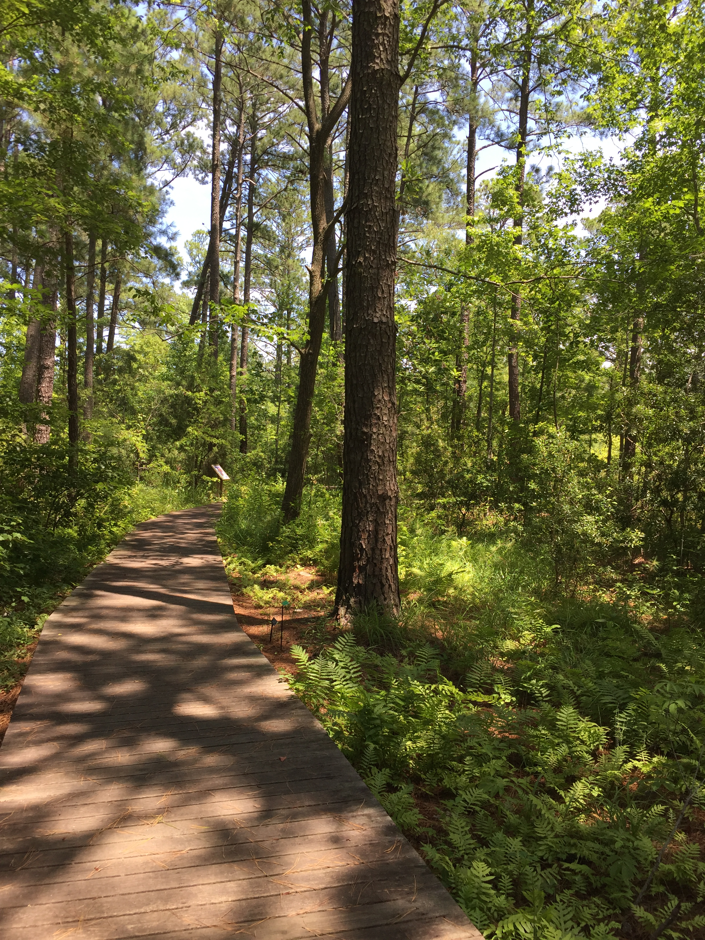 A boardwalk with educational signage introduces coastal forest habitats in the Virginia Native Plant Garden. Photo © 2018 Elaine Mills.