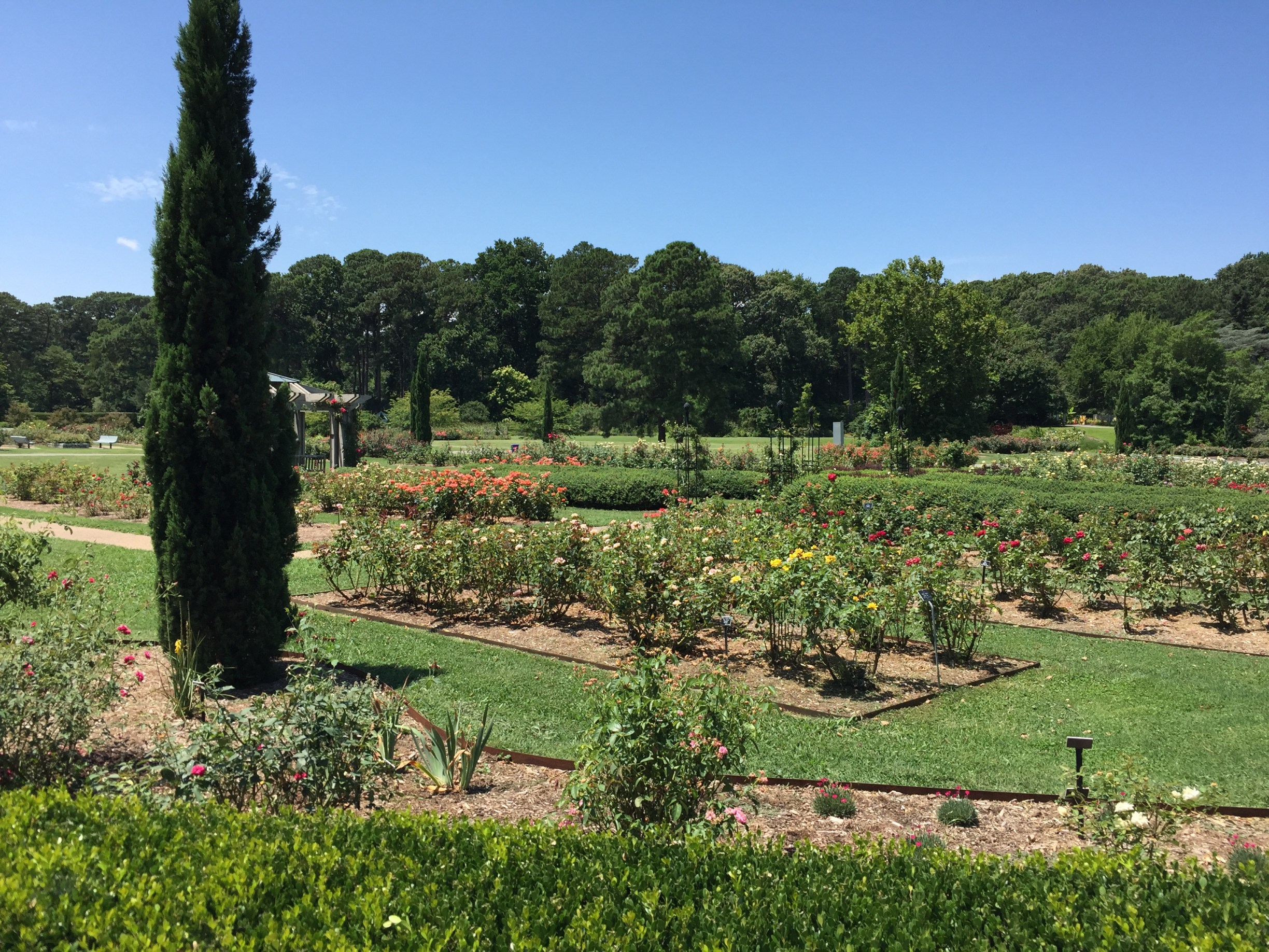 View from the border of the Bicentennial Rose Garden. Photo © 2018 Elaine Mills.