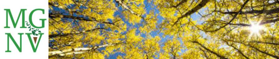 Blue Skies and Yellow leaves