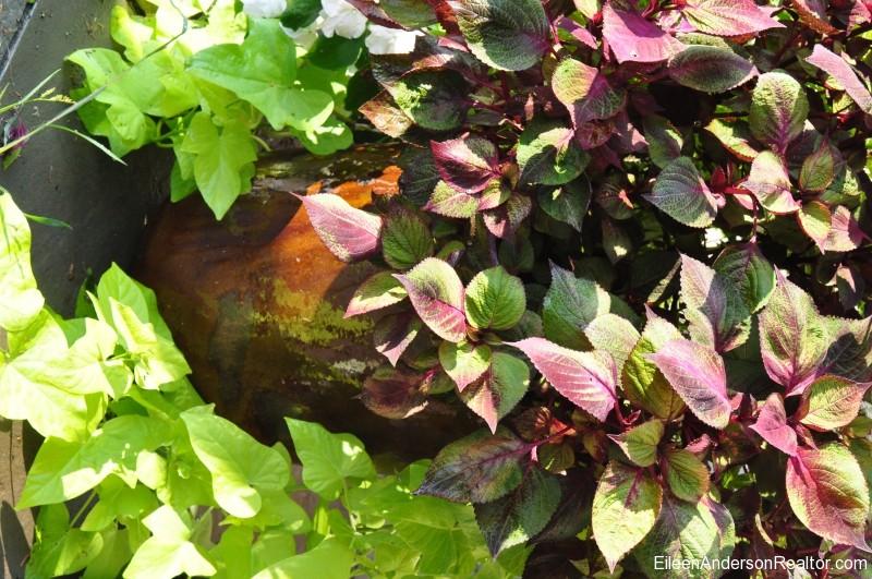 September-Blooming-Plants