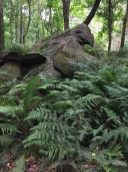 """The """"Ferns of the World"""" exhibit showcases native and non-native ferns in woodsy, naturalistic setting."""