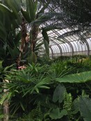 Tropical plants thrive in the new O'Rourke Greenhouse.