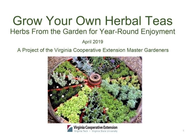 Opening slide of grow your own herbal teas