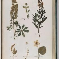 herbarium_images2