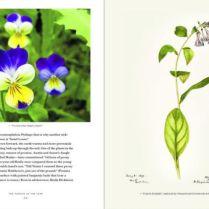violet_bookspread