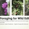 ppt_1st_slide_foraging2