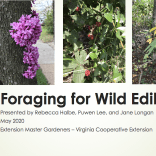 ppt_1st_slide_foraging2
