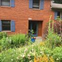 Montage of perennials in walkway garden today